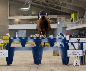 Internationale jumping